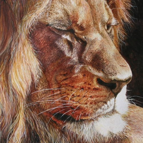 Lion Painting 031