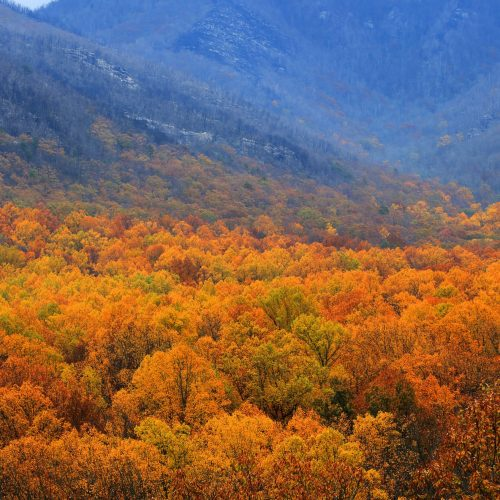 Smokey Mountains Fall